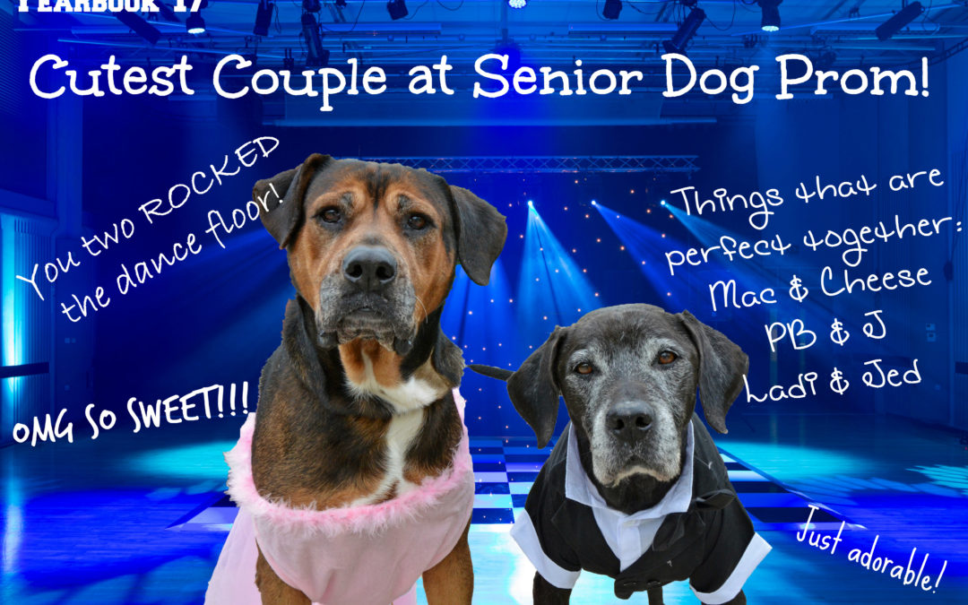 A Senior Dog Prom?